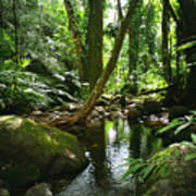 Manoa Valley Stream Art Print