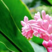 Many Pink Petals Art Print