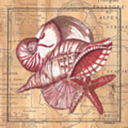 Map And Shells Art Print
