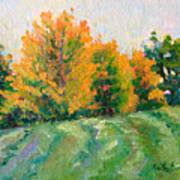Maple Grove Art Print