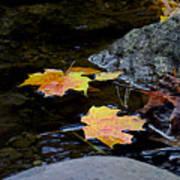Maple Leaves-0006 Art Print