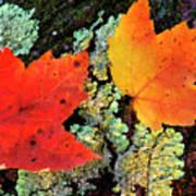 Maple Leaves On Fallen Log Art Print