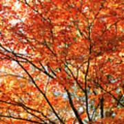 Maple Tree Foliage Art Print