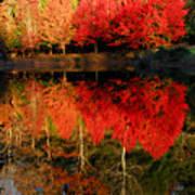 Maple Tree Mirror Art Print