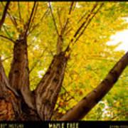 Maple Tree Poster Art Print