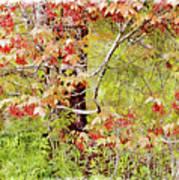 Maple Tree W C  Art Print