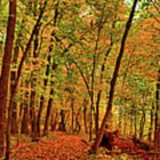 Maple Woods Trail 2 Art Print