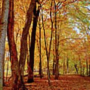 Maple Woods Trail 3 Art Print
