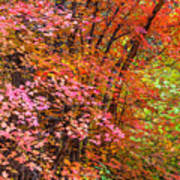 Maples In Pink Art Print