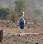 Marabou Stork Of Botswana Africa Art Print
