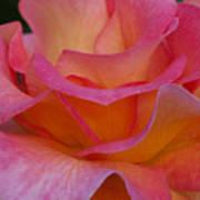 Mardi Gras Rose Macro Art Print