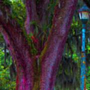 Mardi Gras Tree Art Print
