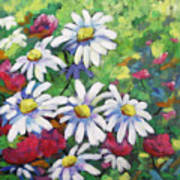 Marguerites 001 Art Print