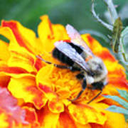 Marigold And The Bee Art Print