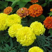 Marigold And Zinnias Art Print