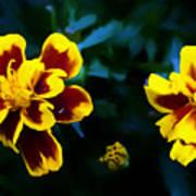 Marigold In Living Color Art Print