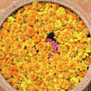 Marigold Offering Art Print