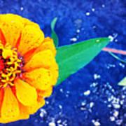 Marigold Under The Stars Art Print