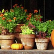 Marigolds And Pumpkins Art Print
