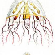 Marine Mollusc Divulging Fish Art Print