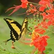 Mariposa Amazonica Art Print