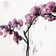 Marning Orchids Art Print