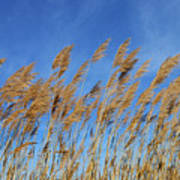 Marsh In The Wind Art Print