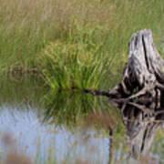 Marshland Reflections II Art Print