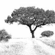 Marula Tree Art Print