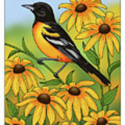 Maryland State Bird Oriole And Daisy Flower Print by Crista Forest