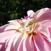 Master Gardener Pink Dahlia Flower Garden Art Prints Canvas Baslee Troutman Art Print