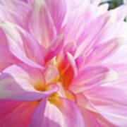 Master Gardeners Pink Dahlias Art Prints Baslee Troutman Art Print