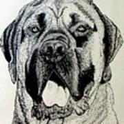 Mastiff Art Print