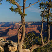 Mather Point South Rim Grand Canyon Art Print