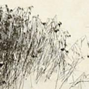 Matsuo Basho Remembering Art Print