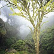 Maui Moss Tree Art Print