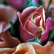 Mauve And Peach Roses Print by Kathy Yates