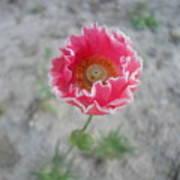 May   Flower  Art Print
