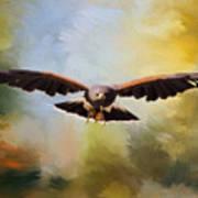 Maybe - Hawk Art Art Print