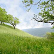 Meadow View Spring Art Print