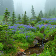 Meadows In The Mist Art Print