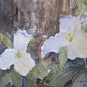 Meaghan's Trillium Art Print
