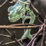 Mellers Chameleon Portrait 3 Art Print