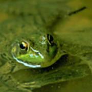 Mellow Frog Art Print