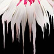 Melting Petals Art Print