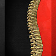 Memento Mori - Gold Human Backbone Over Black And Red Canvas Art Print