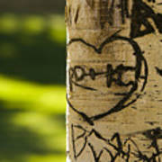 Memories In The Aspen Tree Art Print by James BO  Insogna