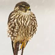 Merlin In A Snow Storm Art Print