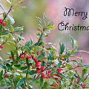 Merry Christmas - Berries Art Print