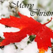 Merry Christmas Leaf Art Print